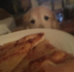 Word of the week: intent. My dog was intent on eating my pizza