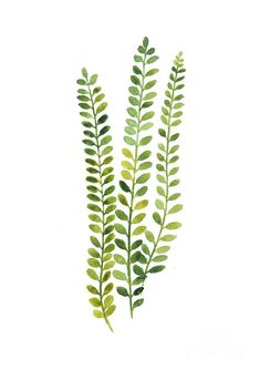 Green Fern Watercolor Minimalist Painting Art Print by Joanna Szmerdt - Acuarela - Minimalismus İdeen Watercolor Plants, Watercolor Leaves, Watercolor Paintings, Flower Watercolor, Green Watercolor, Green Paintings, Art Paintings, Plant Painting, Plant Art