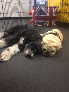 Darcy and Benny put their heads together to come up with ideas for the next issue of fetch! magazine