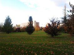 Biblioteca en otoño