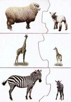 JUEGO ASOCIACIÓN - Andrea C P - Picasa Albums Web Autism Activities, Animal Activities, Toddler Activities, Preschool Science, Preschool Classroom, Animal Projects, Animal Crafts, Teaching Kids, Kids Learning