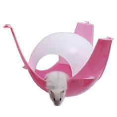 Hamster Capsule Hamster Cage Small Pets House Capsule Hamster Nest Pet Toys New Pet Accessories Drop Shipping Hamster Toys, Cat Toys, Hamsters, Rodents, Animal House, Animal Jewelry, House Prices, Pet Accessories, Dog Bed