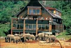 Treetops Hotel Aberdare, Kenya Fabulous!! Watched the animals come in at night to moonlight.
