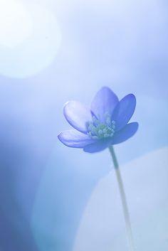 FlowerLight by Mikael Sundberg on 500px