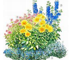 Планы и схемы цветников из многолетников Для  композиции были выбраны ярко-желтые кактусовые георгины (1) с острой формой лепестков, высаженные в центре. С их красотой пытаются соперничать «лохматые» красные цветки монарды цитрусовой (3), обладающие приятным лимонным ароматом. В качестве фонового растения использованы кусты высокорослого синего дельфиниума гибридного (2). Плотные посадки дубровника обыкновенного (4), окружает все  цветы низким голубым бордюром.