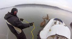Twee hulpeloze herten zitten vast op het ijs - Kan iemand die dieren nog helpen? Albert Lea, Frozen Pond, Minnesota, This Man, Fighter Jets, Deer, Facebook, Animals And Pets, Father
