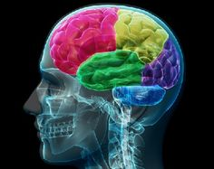 3 Lessons the Brain Can Teach Us About Learning