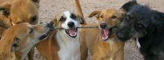 София: 600 кучета осиновени за година - Първи Български Зоопортал