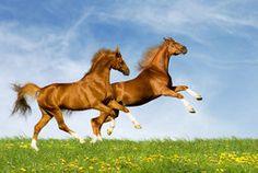 Atlar, yeşil, doğa, yaz