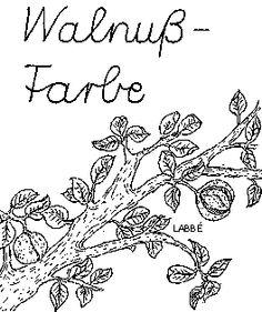 Im Wald: Färben mit Wallnuss - Zzzebra, das Web-Magazin für Kinder | Labbé Verlag