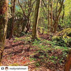 【milliondollarlifestyle1984】さんのInstagramをピンしています。 《#Repost @mollynishimori with @repostapp ・・・ My hometown 故郷の森 #nofilter #nofilterneeded #forest #green #nature #nature_perfection #japan #japanese #shikoku #kouchi #ko-chi #四国 #高知 #高知県 #ノンフィルター #森 #癒し》