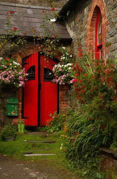 Red door, climbing roses!