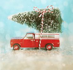 vintage truck and bottle brush tree