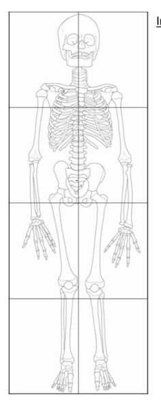 Printable Scale Drawing of a Child Skeleton puzzle Preschool Science, Teaching Science, Science For Kids, Science Activities, Life Science, Science And Nature, Teaching Resources, Human Body Activities, Classroom Ideas