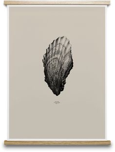 1:1 OYSTER (SAND) BY FORM US WITH LOVE. Buy print at https://paper-collective.com/product/nature-11-oyster-sand/ #papercollective #art #illustration #drawing #nature #monochrome #grey #print #poster #posterdesign #design #interior #home #decor #homedecor #wallart #artprint