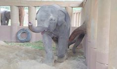 Adorable moment elephants rush to welcome baby orphan