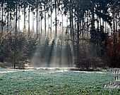 Woodland photograph, sunbeams, sunrays in the forest, whimsical, dreamy wood, 12x8, Giclee print - titled: Magic Forest