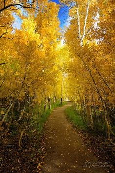 You never know where the #path may lead, so keep moving forward. #autumn #yellow