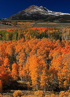 Conway Summit - Sierra Nevada, California - I just love the eastern Sierra aspen groves, these moutains have a little something for everybody...