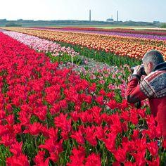 Immer auf der Suche nach neuen tollen Zwiebelblumen für den Garten - der Fluwel-Blog von Carlos van der Veek