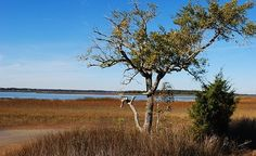 """Winter in the marshes on the Pinckney Island National Wildlife Refuge near Hilton Head Island, South Carolina."" (From: 25 Serene Winter Water Scenes)"