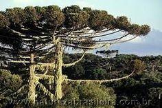 Águas de Pontal: Senado aprova MP que altera áreas de preservação a...