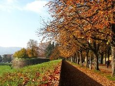 Walls around Lucca