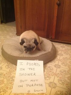 I pooped in the shower