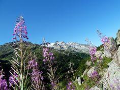 Montaña  entre  flores