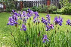 #kukat #puutarha #Punkaharju #flovers #gardening