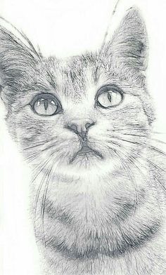 Photo by catcadı cat cute white catcad Realistic Cat Drawing, Simple Cat Drawing, Fine Art Drawing, Painting & Drawing, Drawing Ideas, Pencil Art Drawings, Art Drawings Sketches, Animal Sketches, Animal Drawings