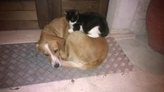 Gatto e cane amici inseparabili www.borgosanmartino.eu Dogs, Pet Dogs, Dog, Doggies