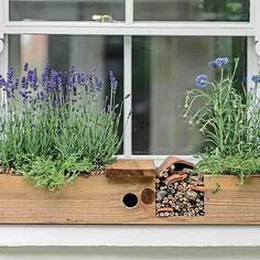 DIY Insect Hotel Windowbox