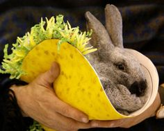 Click to see our gallery of rodeo animals in funny costumes on Chron.com.