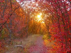I can just imagine walking on this trail on a crisp Autumn day