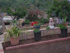 Tropical Garden and Backyard Garden Oasis Paradise. Garden Arches, Backyard Garden Landscape, Small Backyard Gardens, Backyard Landscaping, Backyard Cottage, Balcony Garden, Small Country Garden Ideas, Garden Drawing, Heuchera