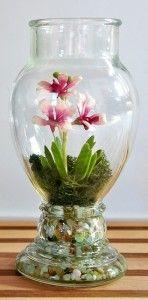 miniature orchids - Popular orchid genera comprised mostly of minis:  Dracula Lepanthes Masdevallia Platystele Pleurothallis Stelis Tolumnia