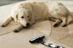 The Best Rated Vacuums for Pet Hair Of 2017