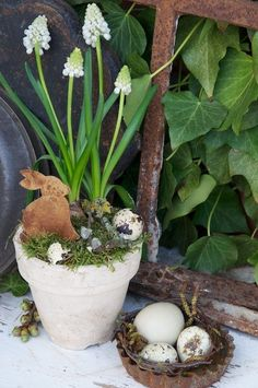 Spring vignette with white grape hyacinth and eggs... so sweet and natural