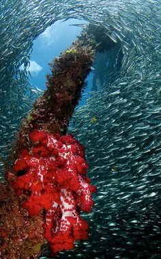 Raja Ampat Underwater - Papua - Indonesia - heaven underwater. believe? YES