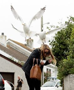 An aggressive seagull swoops. ...♥♥....The Royal Mail have suspended its postal deliveries to Liskey Hill Crescent in Cornwall, due to the street being plagued with aggressive seagulls