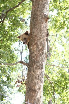 Cage, Good Morning, Swimming Pools, Bears, Survival, Diet, Brown, Black Bear, Polar Bear