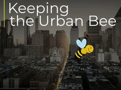 Keeping the Urban Bee | Instructional Design by Tracy Carroll Blurred Background, Background Images, Animated Bee, Instructional Design, Saturated Color, Video Editing, Challenges, Hero, Urban