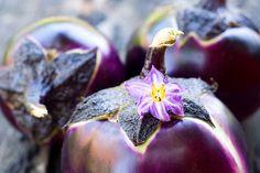 Jorge Cruise's Eggplant Roll-Ups