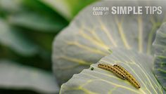 6 Ways to Fight Fall Garden Pests
