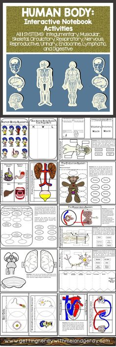 Over 30 interactive notebook activities covering all body systems!