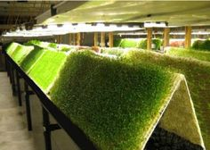 source: AgriHouse Aeroponic System