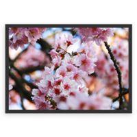 Poster Cherry Blossom