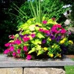 Annuals, Containers, Container Gardening, Container Plantings