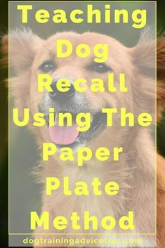 Teaching Dog Recall Using The Paper Plate Method - Dog Obedience Training Tips - Dogs Dog Training Come, Basic Dog Training, Training Your Puppy, Potty Training, Training Schedule, Agility Training, Dog Agility, Training Equipment, Pit Bull